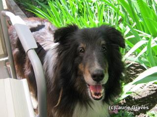 Her dog buddy Liam