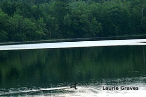 Suspicions confirmed. The loon was too far away for me to get a good shot with my little Cannon.