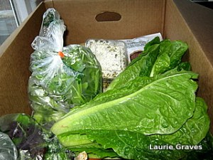 Fresh lettuce and other veggies