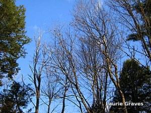Blue sky, no geese