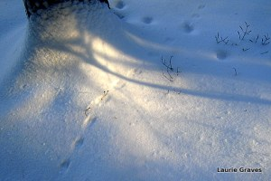 Tracks and more blue shadows