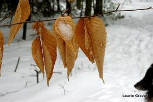 Winter leaves and a noble profile