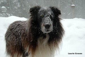 Snow dog, aka Liam