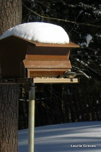 Chickadee at the feeder and blue shadows in back