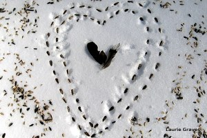 The photo I used for this years Valentine's card. I froze my little fingers making that bird-seed heart in the backyard.