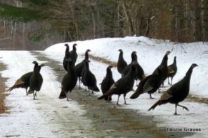 The flock decides