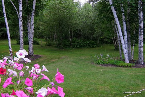 The lovely backyard where the party was hosted.