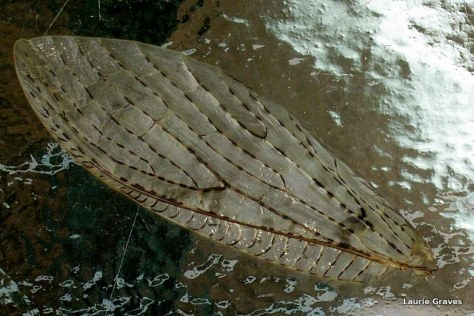 A wing found in the backyard