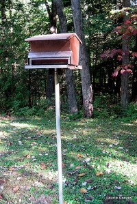 The bird feeder, sans squirrels