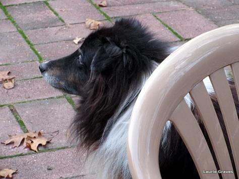 Liam, the senior dog
