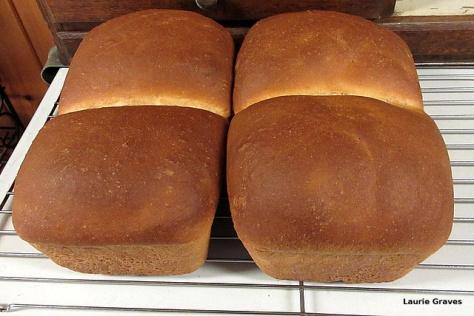 First bread, a little too dark