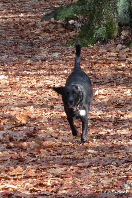 Somara running lickety-split