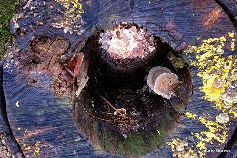Through the log