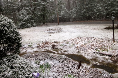 Our front yard
