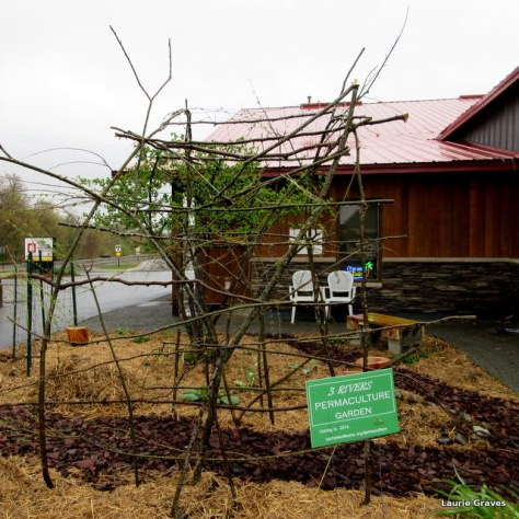 Railroad Square's new permaculture garden
