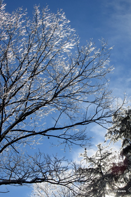 From a recent ice storm, where, fortunately, we didn't lose our power.